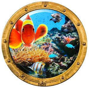 Décoration piscine Poisson Clown Hublot  Ø 60 cm colle renforcée